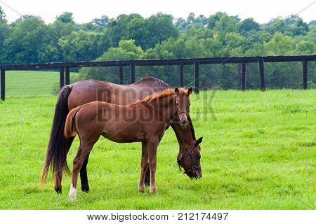 Portrait of mare with her colt on pastures of horse farms.