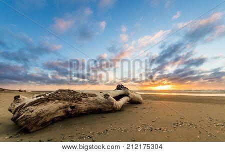 Wash up log on a flat sandy Beach at sunset.