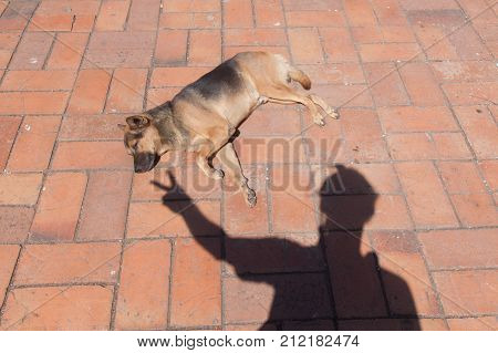 Funny image shadow and dog on floor .