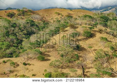 Hill with trees in Monteverde, Costa Rica