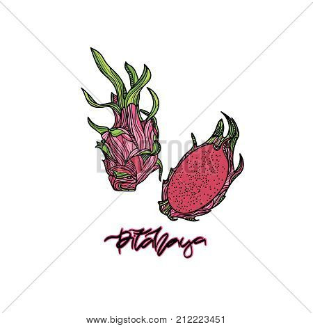 Pitahaya vector illustration on transparent background.  Hand drawn lettering -