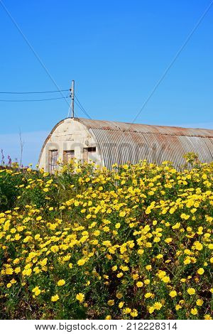 Pretty yellow Spring flowers with an old military building to the rear during the Springtime Malta Europe.