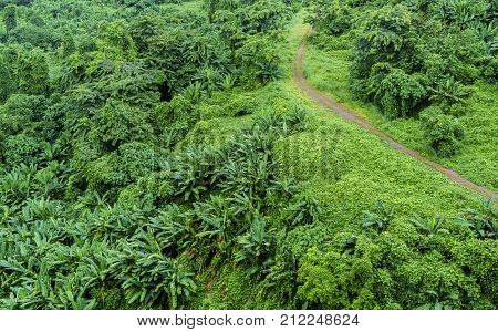 Beautiful green mixed forest and mountain Nakhon Nayok Province Thailand