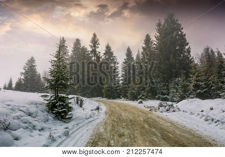 Road Through Foggy Spruce Forest In Winter