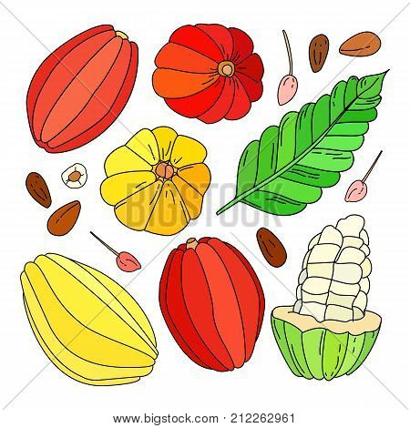 Cocoa fruit illustration set Hand drawn vector tropical cacao fruit leaf seed and flower isolated on the white background doodle or sketch