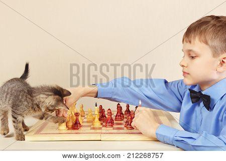 Beginner grandmaster with a cute kitten plays chess.