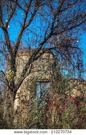A wall of an old abandoned ruined brick house visible through thickets. The debris of an old building. An autumn day, Ukraine