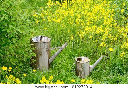small and large old garden watering cans of galvanized metal poured water on green grass and yellow flowers in summer closeup