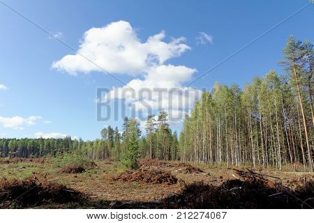 Felling In The European Part Of Russia.