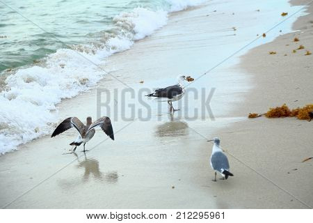 gulls isolated flying on Miami south beach