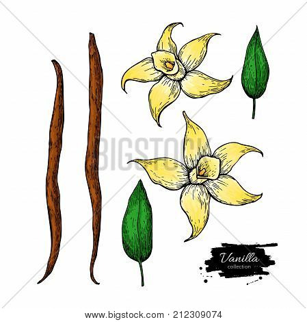 Vanilla flower and bean stick vector drawing set. Hand drawn sketch food illustration isolated on white. Artistic style spice and flavor object. Cooking and aromaterapy ingredient.