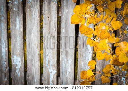 horizontal background image of an old wood plank fence with peeling paint and golden fall leaves hanging over the edge on one side great for greeting card idea.
