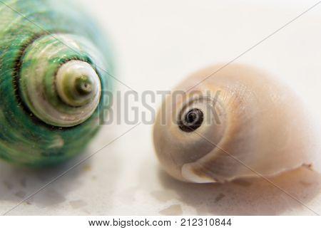 horizontal macro image of two seashells on white background.