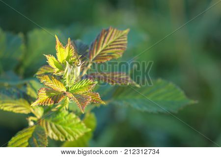 Close up image of green leaves growing and unfurling with copy space