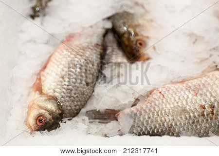 Frozen ice-cold fish in the store Frozen fish. Freshfish market. Gilt-head bream. Sea bream fish on ice. Fresh fish on ice for sale at market.