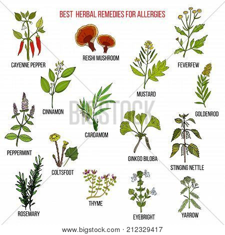 Best herbal remedies for allergies. Hand drawn vector set of medicinal plants
