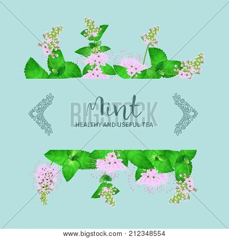 Arrangement of fresh mint leaves texture isolated on mint background.Abstract banner of motif peppermint leaf herbs and flowering.Vector realistic illustration.