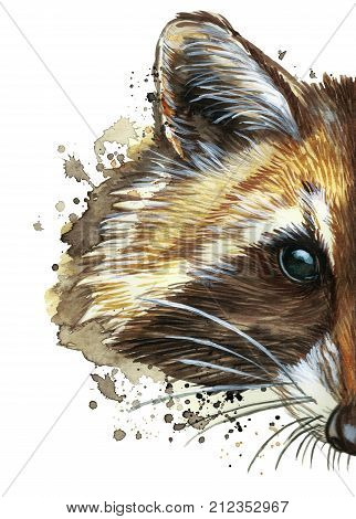 watercolor picture of an animal of the genus of predatory mammals of the raccoon family
