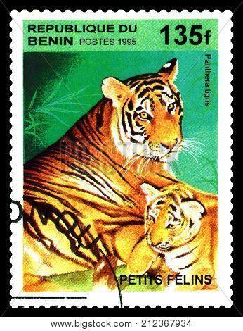 STAVROPOL RUSSIA - November 07 2017 : A Postage Stamp Printed in the Benin shows Tiger(Panthera tigris) circa 1995