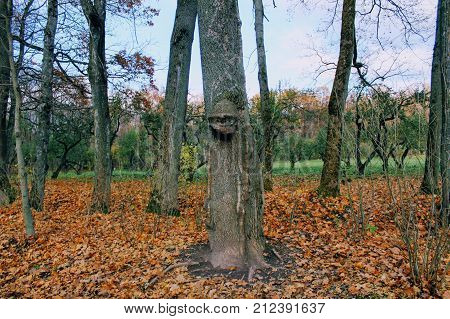 An unusual tree in the park in the estate of Count Leo Tolstoy in Yasnaya Polyana.