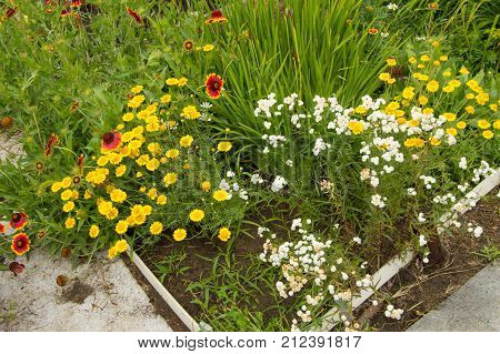Flower bed and vegetable beds in the summer garden.