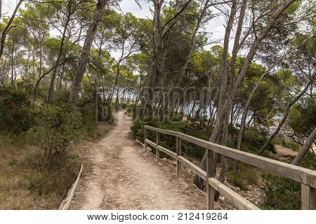 Path in the Mondrago natural park in Santanyi on Majorca island (Balearic Islands, Spain)