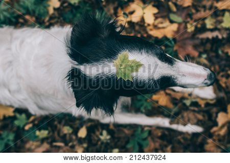Dog with leaf on her head