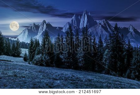 Forest In Mountains With Rocky Peaks At Night