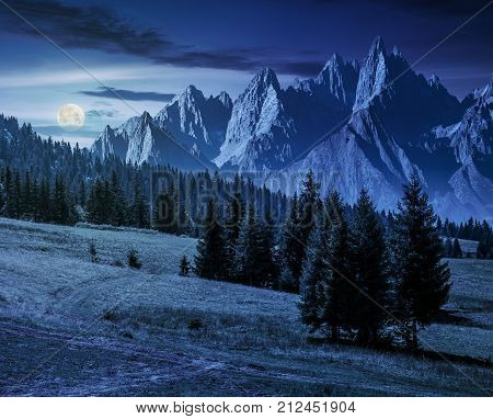 Spruce Trees On Hillside In Mountains At Night