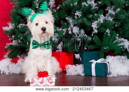 Decorated west highland white terrier dog as symbol of 2018 New Year with green bow tie decorative bows and christmas horn and christmas pine tree with gifts on background