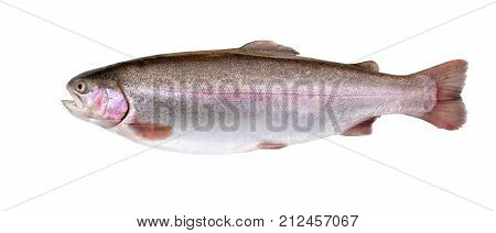 Salmon fish isolated on white background. Rainbow trout. Fresh fish.