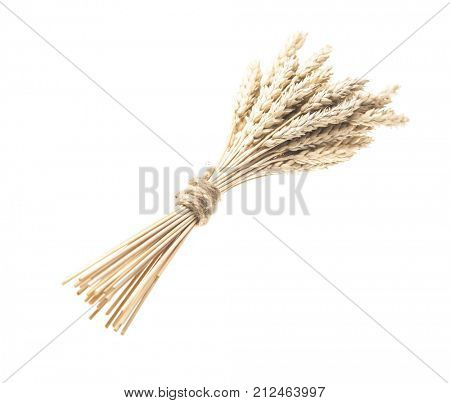 Spikelets of wheat stacked in sheaf isolated on white background cutout.