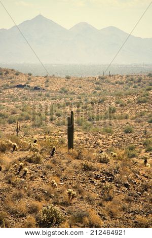A lone saguaro in the Sonoran Desert with mountains in the distance.