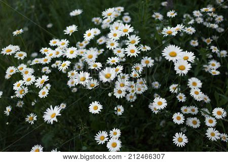 summer meadow wit flowers nature background texture