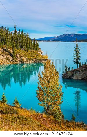 Stunning turquoise Abraham Lake. Rocky Mountains of Canada in the Indian summer. The concept of ecological and active tourism