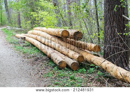 bunch of felled trees near a logging site waiting to be driven away