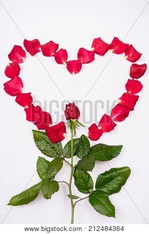 Dear Love, Roses, Special Occasions, Along With Condoms, Isolated Background.