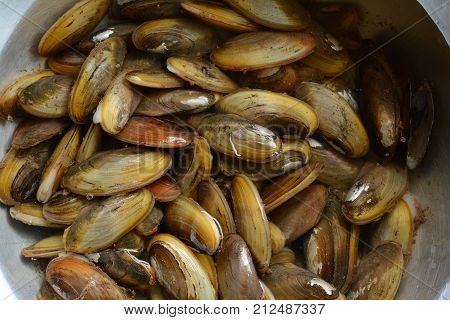 The Clams From Fresh Water Full Of Nutrition