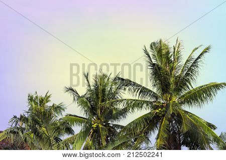 Coco palm tree crown on cloudy sky. Tropical nature vintage toned photo. Coco palm crown with fluffy leaf. Coco palm leaf banner template with text place. Tropical island travel. Vintage palm poster