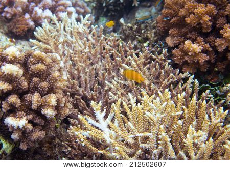 Underwater landscape with yellow fish. Sea shore environment. Tropical seashore underwater photo. Coral reef and tropical fish. Sea fish and corals. Undersea view of marine life. Coral reef landscape