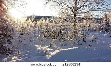 beautiful winter morning in the north of Sweden