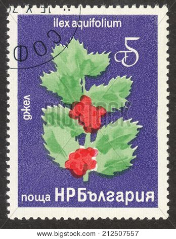 MOSCOW RUSSIA - CIRCA OCTOBER 2017: a post stamp printed in BULGARIA shows Common Holly (Ilex aquifolium) plant the series