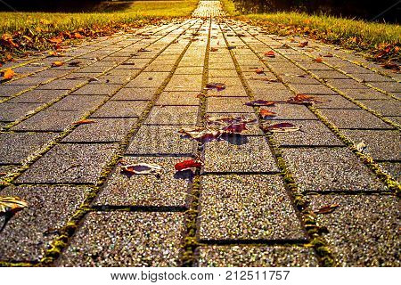 View To Perspective Of The Path Of Paving Stones With Colorful Leaves In Autumn As Background