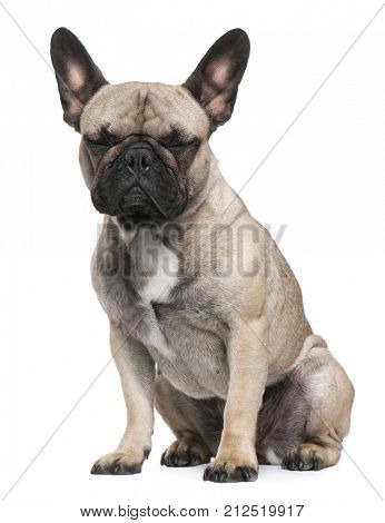 dog, French Bulldog, 12 months old, sitting in front of white background