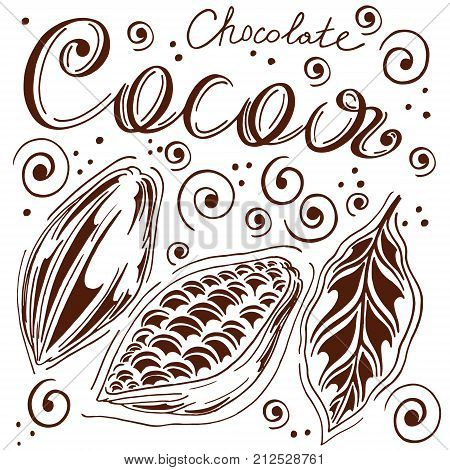 set of cocoa in loose hands with letting cocoa and chocolate cocoa bean kako leaves hand-drawn white background retro style cocoa fruits