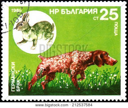 BULGARIA - CIRCA 1985: a postage stamp, printed in Bulgaria, shows a German Shorthaired Pointer and hare