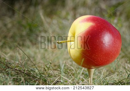 Apple On Golf Tee