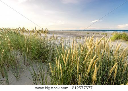 Beach with sand dunes and marram grass in soft evening sunset light. Baltic Sea.