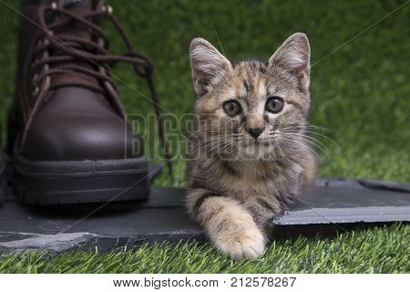 Selective focus at the eyes of adorable cute Kitten lying on a piece of black stone near the Large brown leather shoes on green grass of Artificial turf and looking at the camera