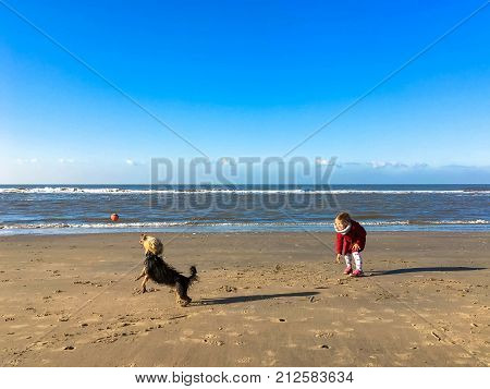 The little girl plays with dog on the beach. The kid throws the ball the dog catches and brings back. North Sea the Netherlands.